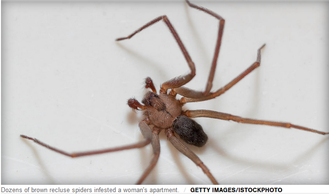 Brown Recluse Spider Infestation Sends Woman to ER