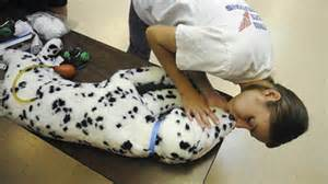 Pet CPR – Just Added